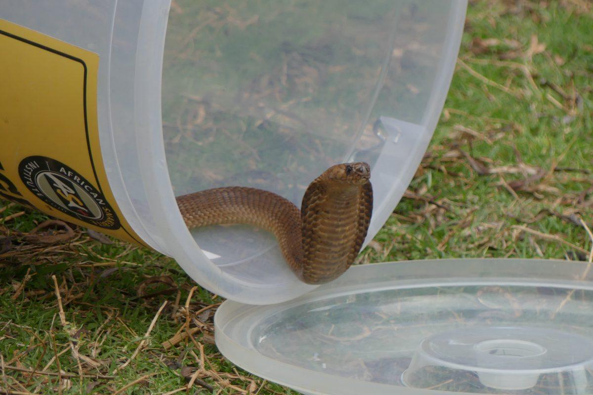 damien lecouvey spécialiste herpétologie serpents explorateur