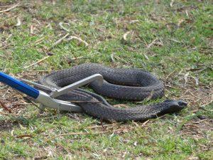 damien Lecouvey spécialiste serpents