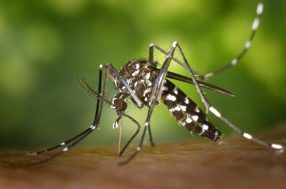moustique tigre damien lecouvey herpetologiste
