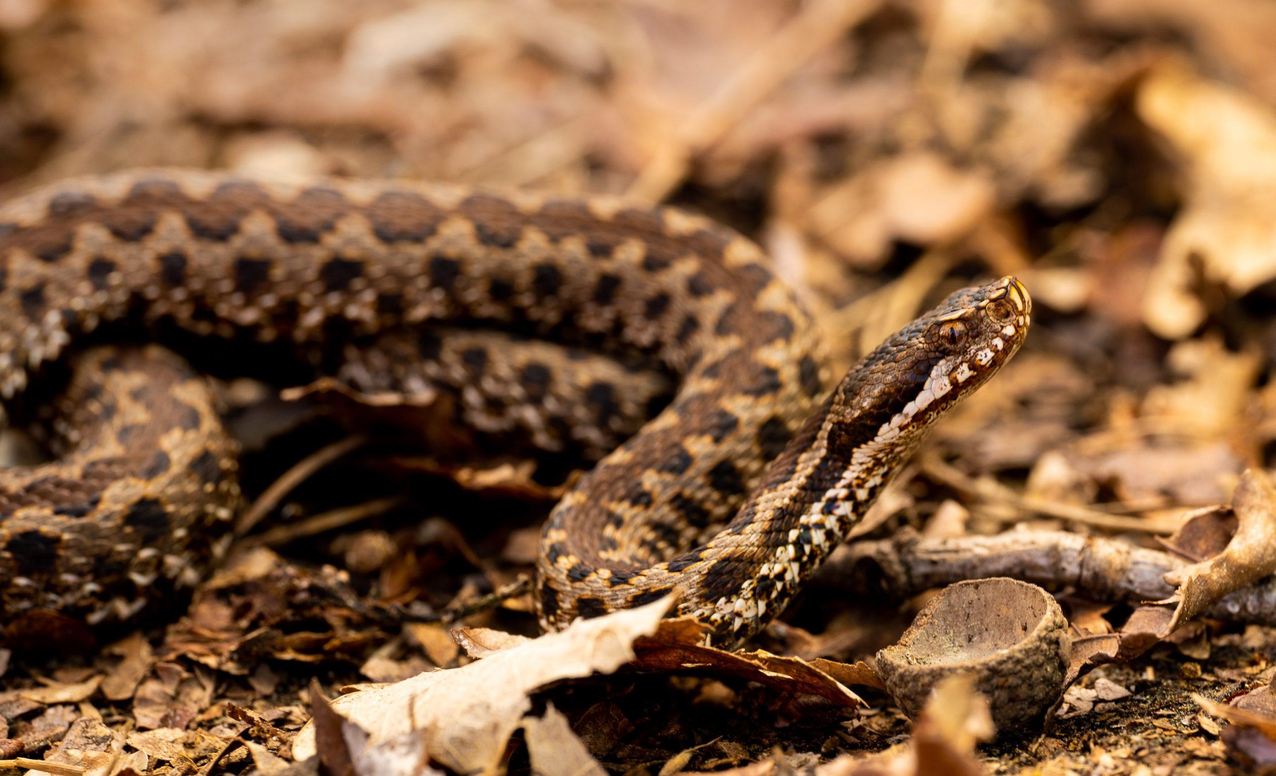 DAMIEN LECOUVEY HERPETOLOGUE spécialiste photos reptiles serpents amphibiens